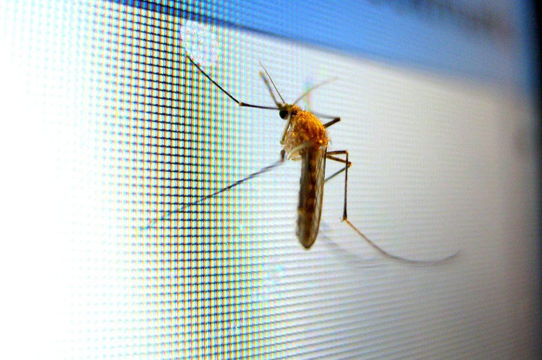 10 mejores modelos de lámparas antimosquitos