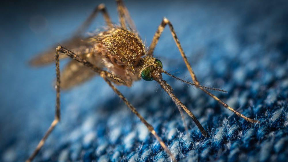 ¿Cuál es la mejor pulsera antimosquitos?