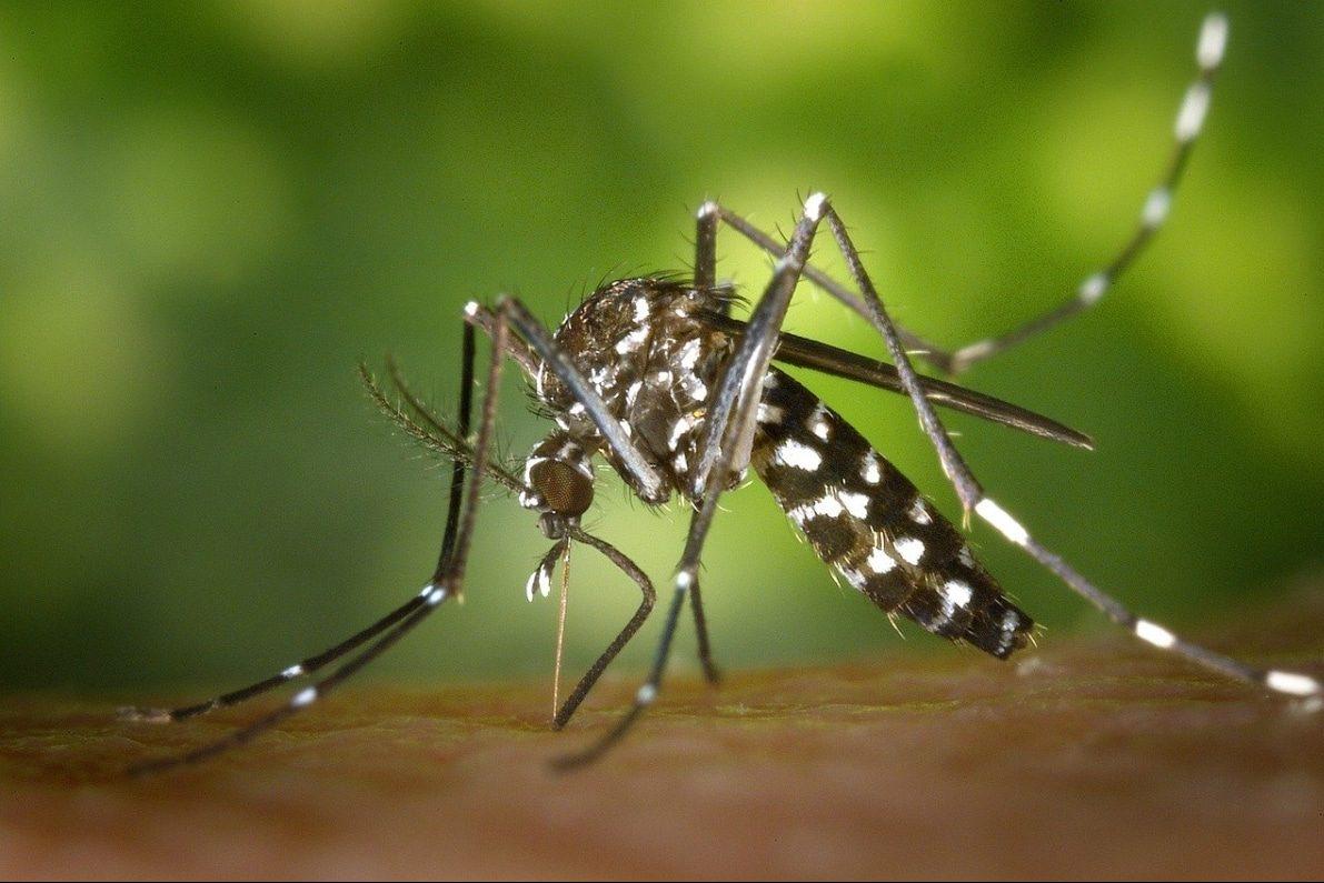 Los mejores repelentes de mosquitos naturales