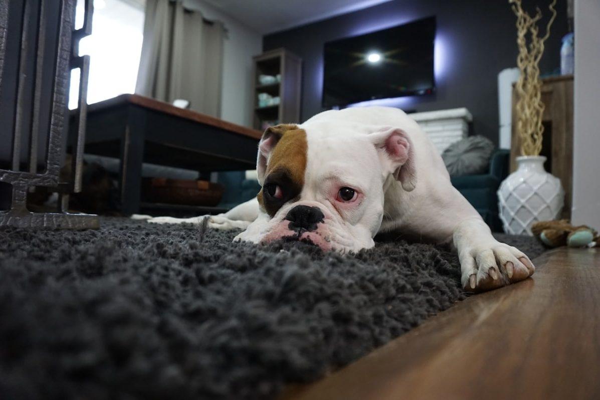 Las mejores alfombras refrescantes para perros para este verano