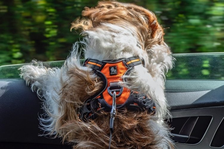 Estudio: 5 modelos de cinturón de coche para perro