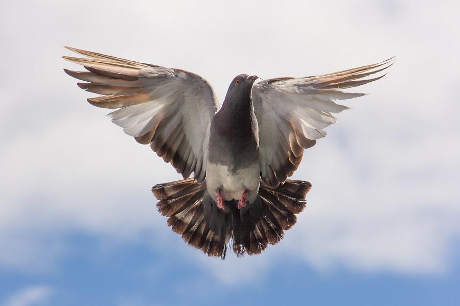 Los mejores ahuyentadores de palomas- Cómo evitar que se acerquen